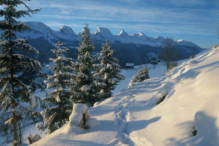 Verschneite Landschaften in St. Gallen laden zu Winterspaziergängen ein.