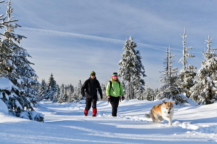 Ausgedehnte Winterspaziergänge mit Hund gehören zum Winterurlaub dazu.