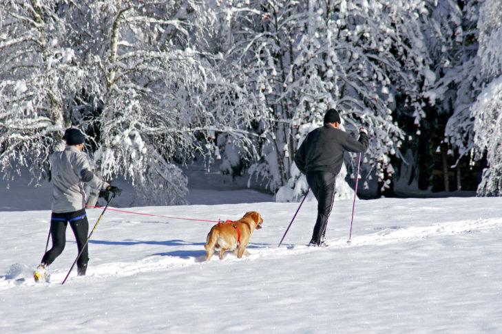 Für Langläufer mit Hund gibt es ausgewiesene Hundeloipen.
