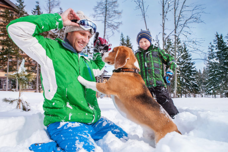 Hunde lieben Schnee - und Menschen lieben Hunde, die im Schnee herumtollen.