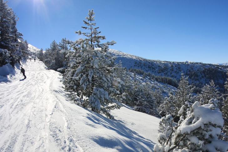Skigebiet Borovets, Bulgarien: Talabfahrten führen in vielen Skigebieten über bewaldete Serpentinen gen Tal.