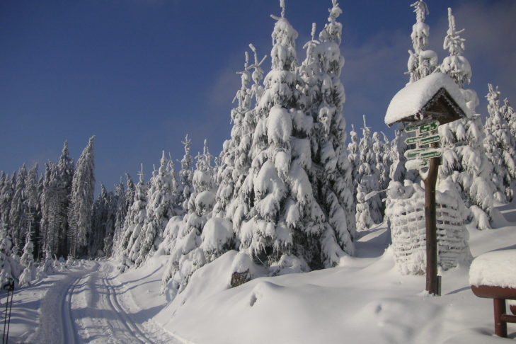 Verschneite Landschaft mit Loipe bei Oberhof.