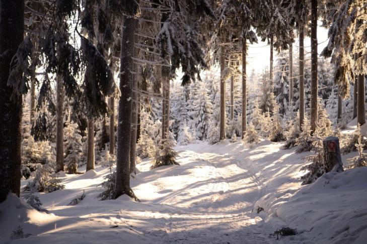 Verschneite Winterwanderwege wie diesen gibt es um Oberhof und Suhl viele.