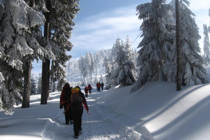 Im Bayerischen Wald warten herrliche Wanderwege auf Aktive.