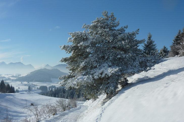 Um Nesselwang und Seeg liegen zahlreiche Winterwanderwege.