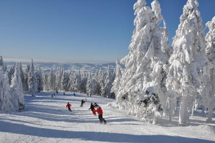Skigebiet Hochficht: Die Pisten schlängeln sich durch verschneite Nadelwälder.