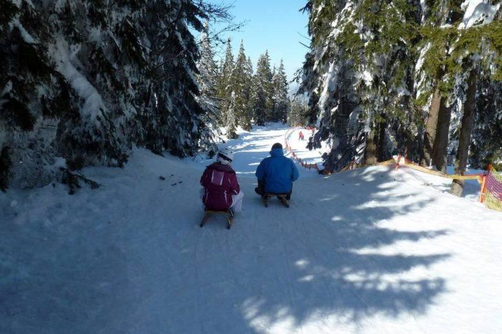 Neben dem Skifahren lässt es sich am Großen Arber wunderbar rodeln.