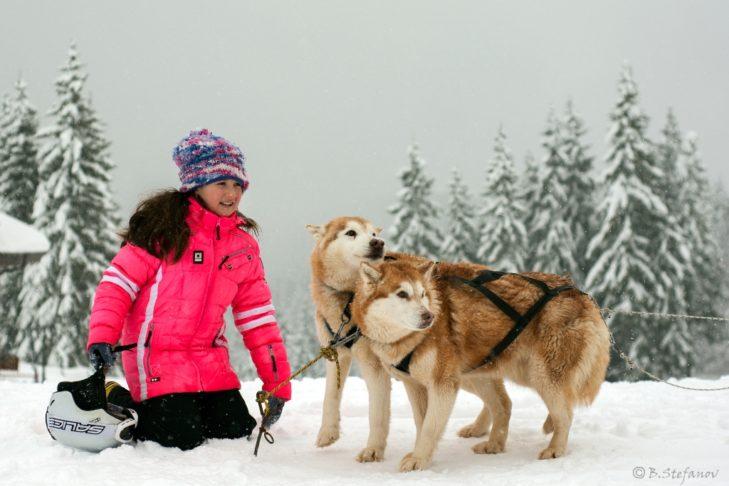 Hundeschlittenfahrten gehören zum Freizeitprogramm in Pamporovo.