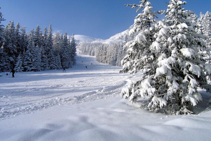 Schneeweiße Tannen säumen die familienfreundlichen Pisten.