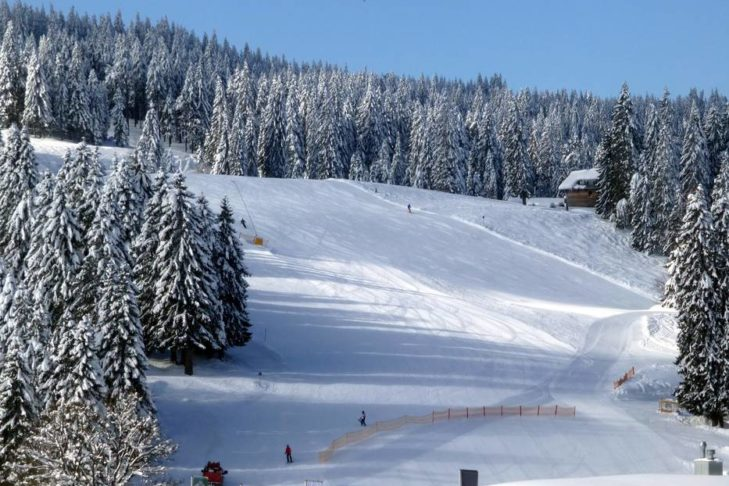 Feldberg: Breite Waldabfahrt im Skigebiet Seebuck-Grafenmatt.