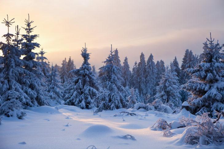 Schnee in Deutschland: Winterwonderland im Harz.