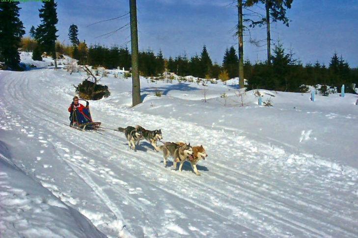 Hundeschlitten auf einer Tour durch das Riesengebirge.